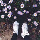 TUMBLR Pinterest Account