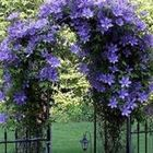 Blair's Landscaping Gallery Pinterest Account