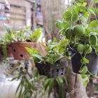 Best House Plants Pinterest Account