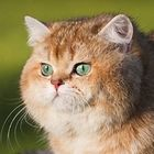 Takumi SUETOMI's Pinterest Account Avatar