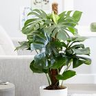 House Plants Pinterest Account