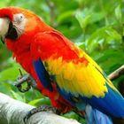 parrot Pinterest Account