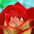 Nariman Eladl Pinterest Account
