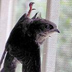 Blackbird Pinterest Account