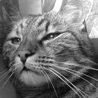 Lili instagram Account