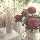Shabby and Romance instagram Account