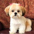 Karen W Dodds Pinterest Account
