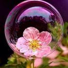 jewelsinthecrown's Pinterest Account Avatar