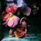 Kate Varga Pinterest Account