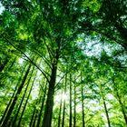 forest hiraki  instagram Account