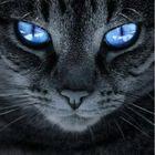 Lau Pinterest Account