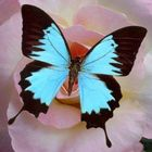 dezer world's Pinterest Account Avatar