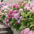 Decoración de Jardines y Adornos Florales instagram Account