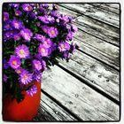 Carol Jones Pinterest Account
