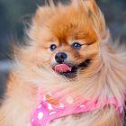 Cuto Puppy's Pinterest Account Avatar