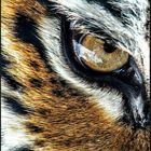 Laura L.V.'s profile picture