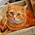 Cat Dog Animal Photos's Pinterest Account Avatar