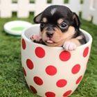 Cute Overload ! Pinterest Account
