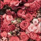 Sumaya Abdul Pinterest Account