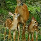 kendry cascante Pinterest Account