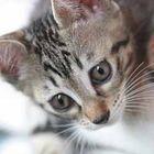 Fujicameken Pinterest Account