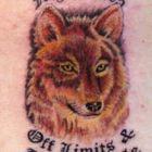 Polite Fauna Pinterest Account