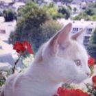 Jeannine Tirel Pinterest Account