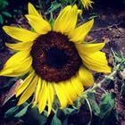 Suzanne Kitchens Pinterest Account