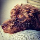 Elida Rivera instagram Account