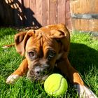 MustLuvBoxers Rescue Pinterest Account