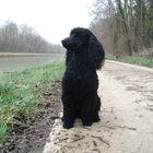 Le chien assis au bord du canal Pinterest Account