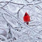 Bird Love Pinterest Account