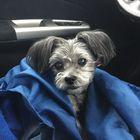Ursus Adorablus instagram Account