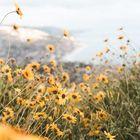 Ladyflower ♧ Pinterest Account