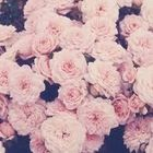 Anna Fabbri Pinterest Account