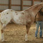 صور خلفيات بنات راكبات الخيل 2020 الصفحة العربية Horses Horse Breeds Horse Love
