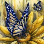 Yello Orange Butterfly Original Watercolor By Alisaadamsoneart