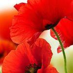 0dbce077653 Mina Salem (salemina6) on Pinterest