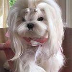 5b46d54c7 Other Dog Breeds I Like. Dawna Watts • 433 Pins