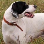 19 Ungewohnliche Hunde Kreuzungen Die Dein Herz Im Sturm Erobern Werden Mixed Breed Dogs Australian Shepherd Unique Dog Breeds