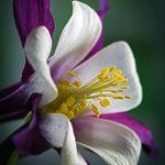 The Secret Garden Centre Secretgardener On Pinterest