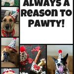 Handmade High Quality Pawty Supplies Because Every Dog Deserves A Pawty Dog Birthday Dog Party Hat Dog Party