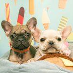 Puppies N Love (puppiesnloveaz) on Pinterest