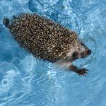 A Hedgehog Checklist Must Have Essentials Hedgehog Cage Small Animal Cage Hedgehog