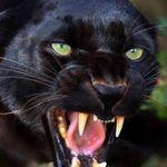 Pyretta Blaze (amylea216) on Pinterest