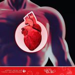 يسأل الكثير ما هو فحص الايكو ومتى يستعمل الايكو هو نوع من أنواع التراساوند تستخدم فيه أمواج صوتيه عالية التردد وتحولها إلى صور حقي Cardio Heart Health Clinic