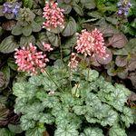 Rosenhagtorn Paul S Scarlet Hojd 140 Cm Plantagen Tradgardsvaxter Trad Vaxter