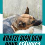 Was Kostet Blutuntersuchung Mit Grossem Blutbild Beim Hund Dogco De Hunde Hunde Ernahrung Hundegesundheit