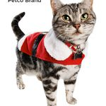Fred Must Have These Santa S Little Helpers Are Sure To Get Your Cat S Attention Keep Your Cat Exercising And Entertained A Cat Exercise Cats Meow Crazy Cats