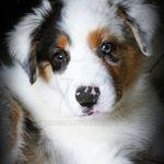 randki z voor hondenliefhebbers